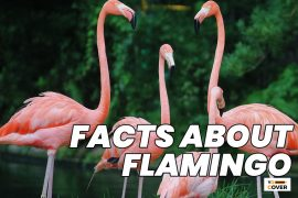Interesting Facts about Flamingos