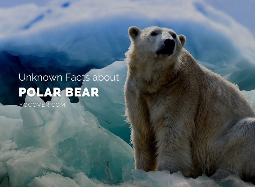 Facts About Polar Bear
