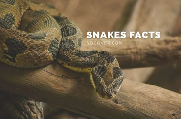 facts about snake