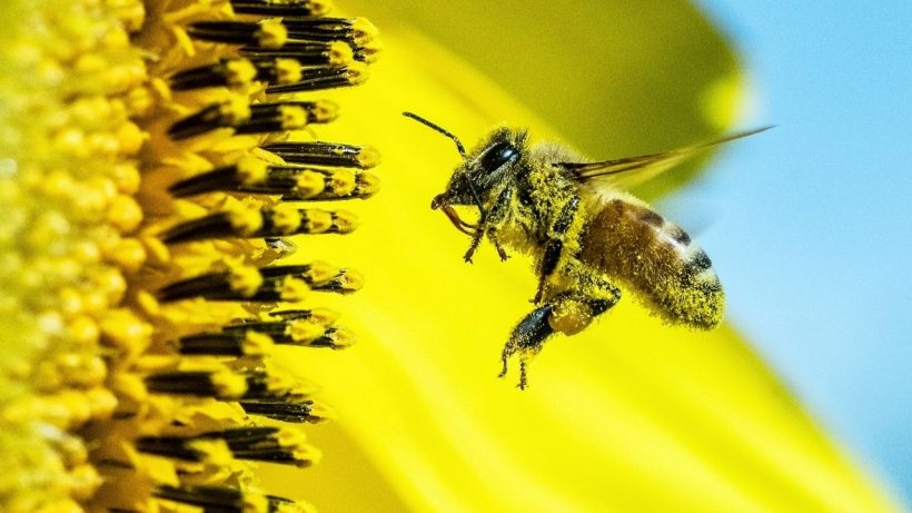 facts about bees